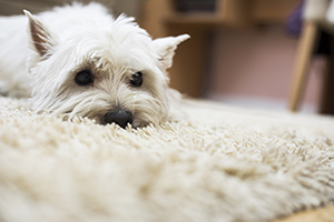 Pet Stain Removal Experts Long Beach