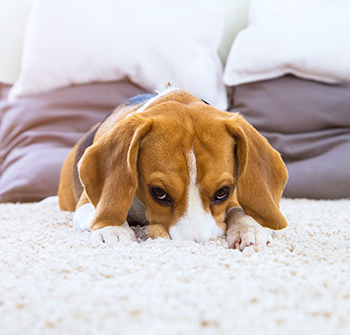 Long Beach Residential carpet cleaning thats affordable and dependable. We use organic cleaning solutions making our carpet cleaning perfect and safe for your children and furry friends.